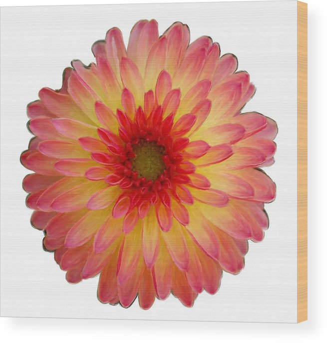 Red Wood Print featuring the painting Red And Yellow Dahlia by Bruce Nutting