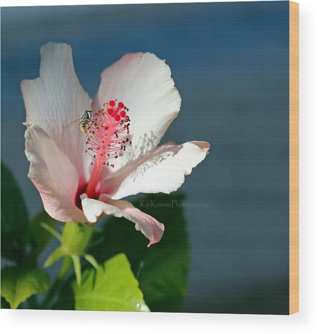 Flower Wood Print featuring the photograph Bee A Flower by Kip Krause