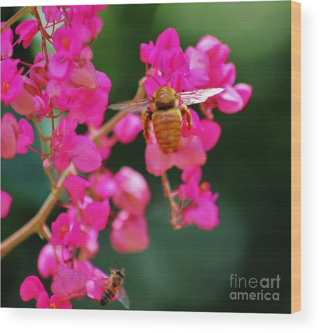 Golden Bee Wood Print featuring the photograph Golden Visitor by Craig Wood