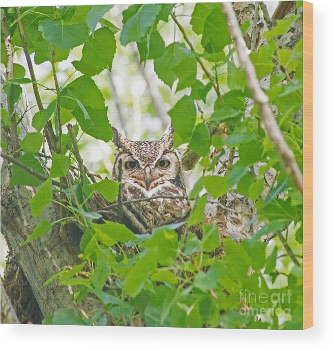 Wildlife Wood Print featuring the photograph The Thoughtful Owl by Martyn Green