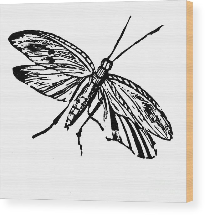 19th Century Wood Print featuring the photograph Flying Insect by Granger