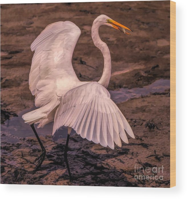 Great White Egret Wood Print featuring the photograph Egret With Fish by Paulette Thomas