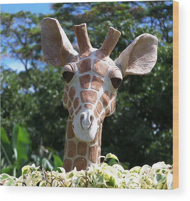 Hawaii Wood Print featuring the photograph Oahu Giraffe by Michael Lewis
