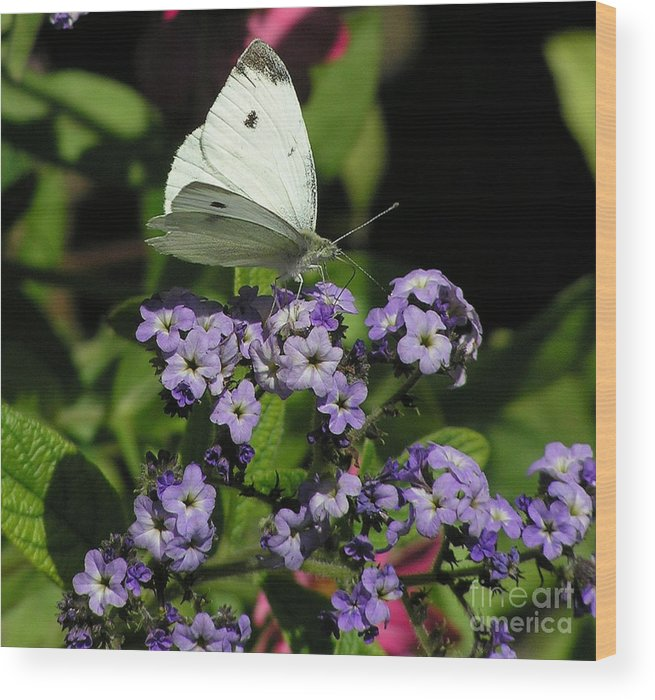White Wood Print featuring the photograph White Butterfly by Louise Magno