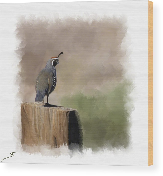 Quail Wood Print featuring the photograph Looking Back by Shanna DuGrosse
