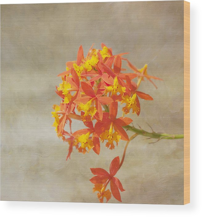 Orange Flower Wood Print featuring the photograph On Fire by Kim Hojnacki