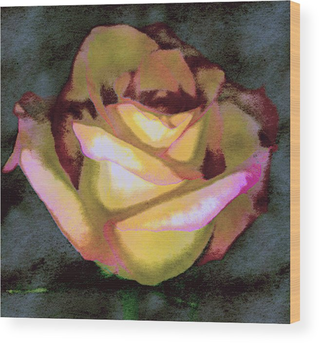 Rose Wood Print featuring the photograph Scanned Rose Water Color by Paul Shefferly