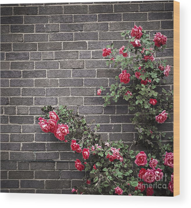 Rose Wood Print featuring the photograph Roses On Brick Wall by Elena Elisseeva