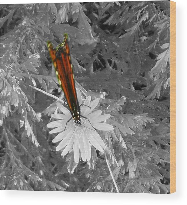 Butterflies Wood Print featuring the photograph Cliff House Butterflies Lll by Heather Weikel