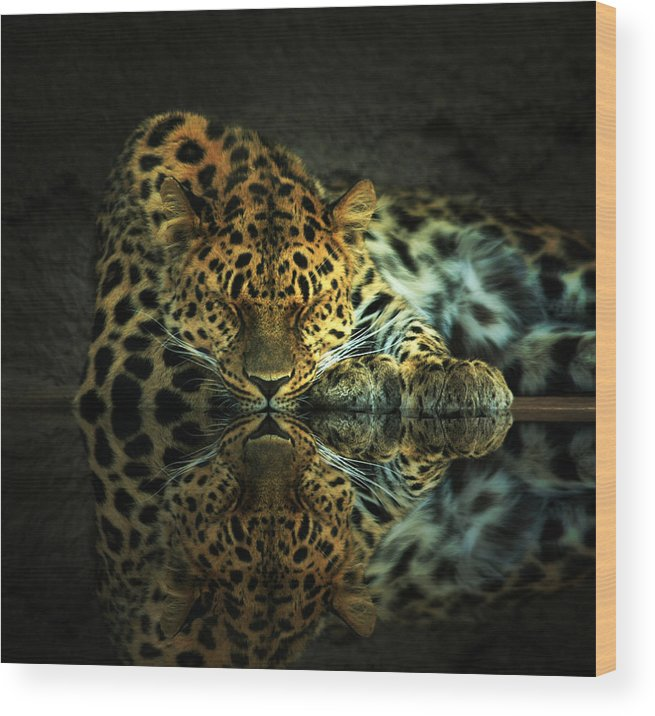 Leopard Wood Print featuring the photograph Endangered by Gene Praag