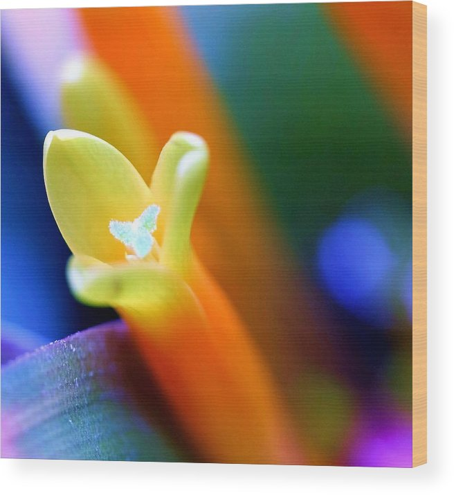 Flower Wood Print featuring the photograph Feelings by Mitch Cat