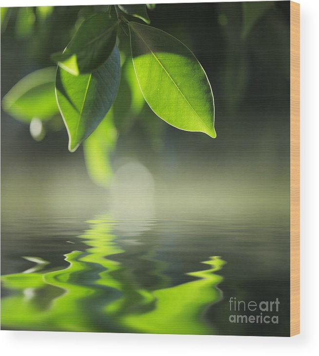 Leaf Wood Print featuring the photograph Leaves Over Water by Konstantin Sutyagin