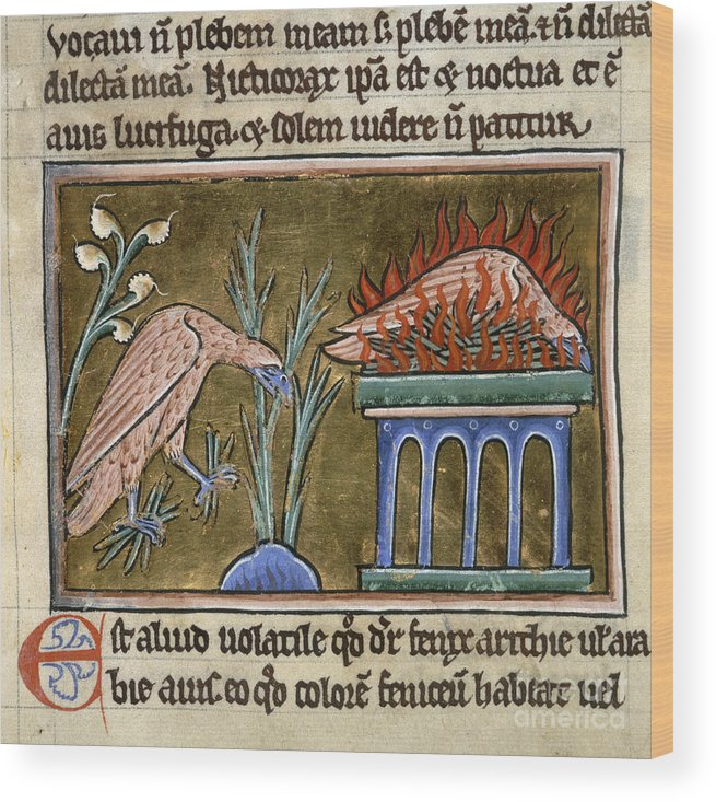 Bird Wood Print featuring the photograph Death And Rebirth Of The Phoenix by British Library