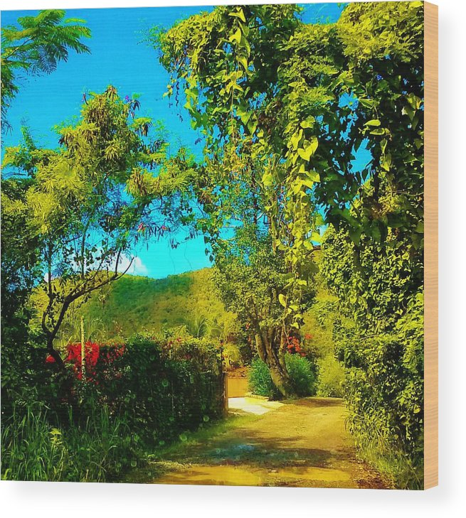 Landscape Wood Print featuring the photograph East End St. John's Usvi by Tamara Michael