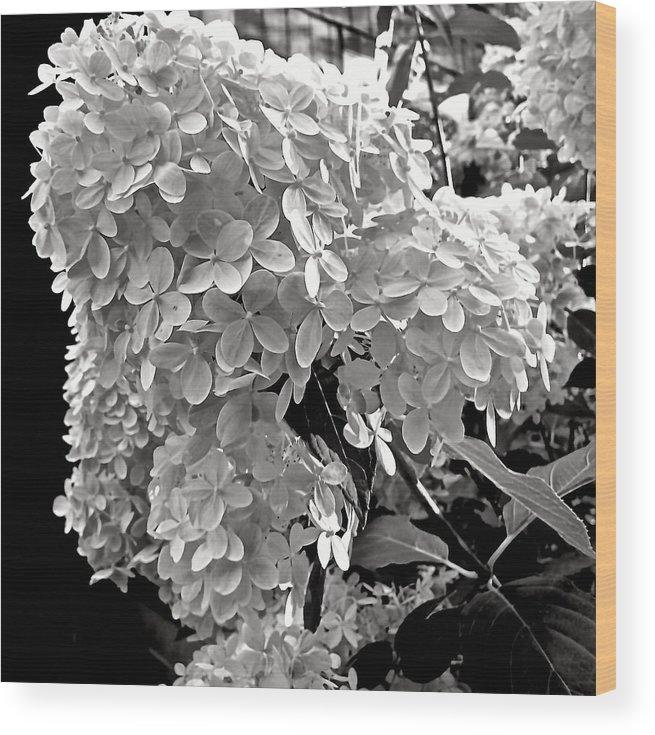 Hydrangea Wood Print featuring the photograph Hydrangea 2 by Elizabeth Tillar