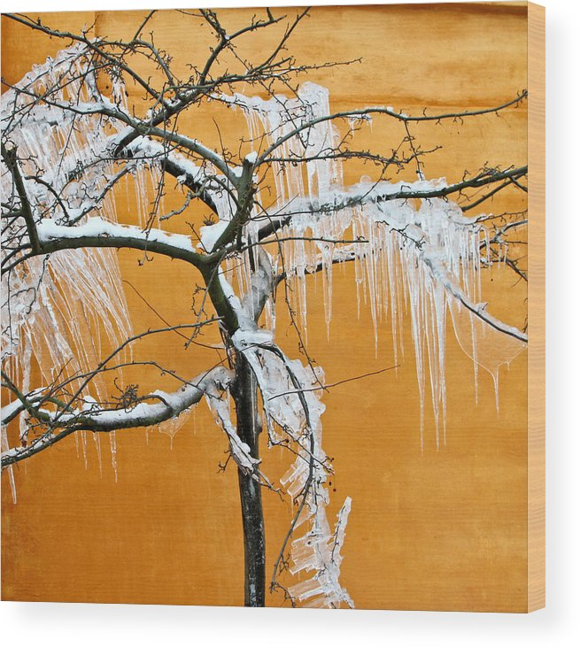 Beautiful Wood Print featuring the photograph Iced Tree by Jean Schweitzer