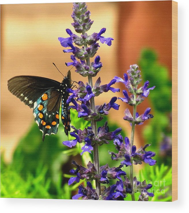 Spicebush Swallowtail Butterfly Wood Print featuring the photograph Spicebush Swallowtail by Marilyn Smith