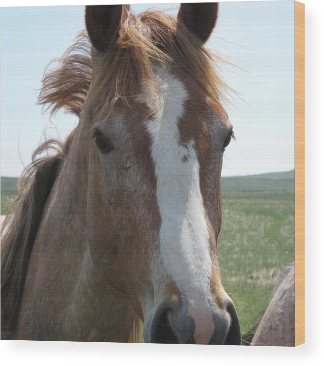 Horse Wood Print featuring the photograph Horse by Wayne Toutaint