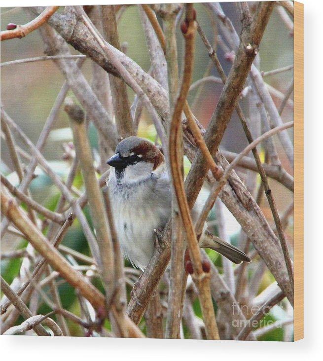 Bird Wood Print featuring the photograph Sparrow by Lennie Malvone