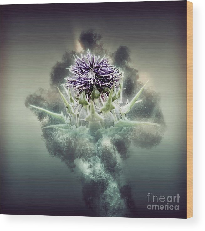 Israel Wood Print featuring the photograph Silybum Eburneum Milk Thistle by Humourous Quotes