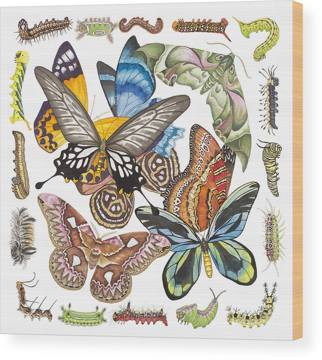 Butterflies Wood Print featuring the painting Butterflies Moths Caterpillars by Lucy Arnold