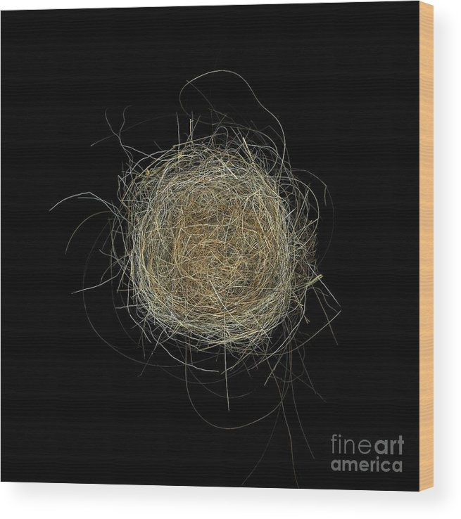 Bird Wood Print featuring the photograph Construction Nr. 2 by Christian Slanec