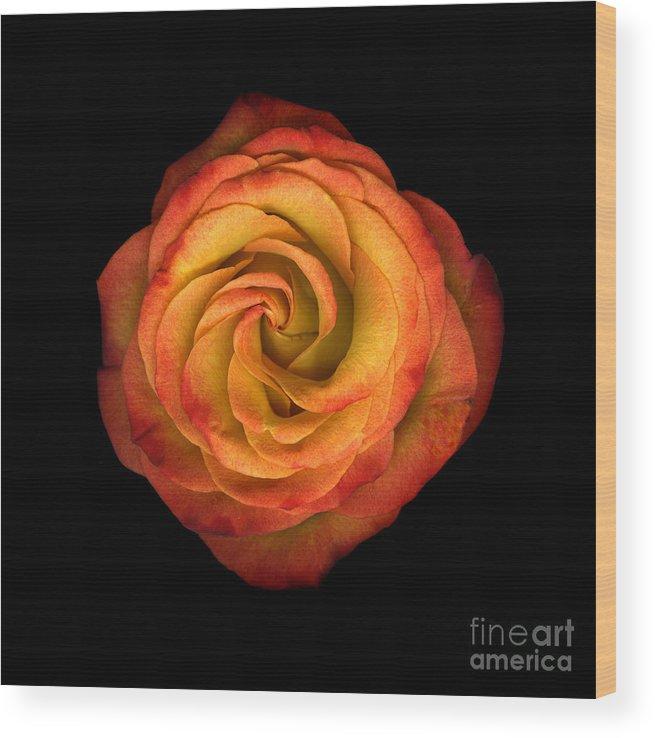 Scanograph Wood Print featuring the photograph La Vie En Rose by Christian Slanec