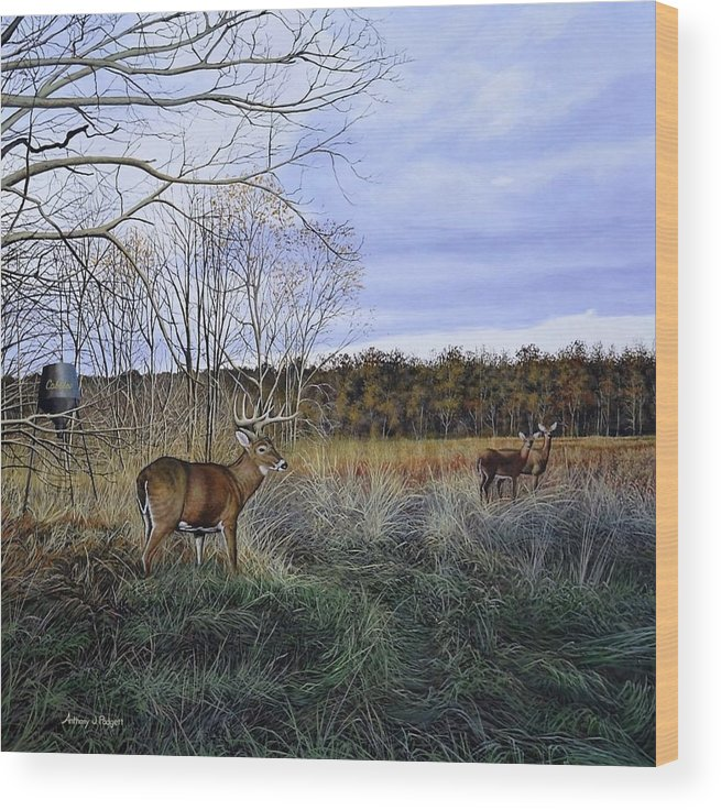 Cabelas Wood Print featuring the painting Take Out - Deer by Anthony J Padgett