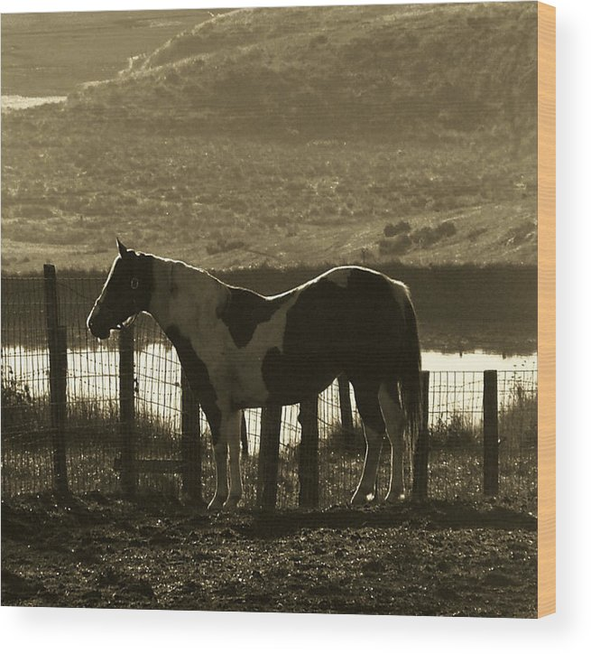 Horse Wood Print featuring the photograph Reflected Light by Donna Thomas