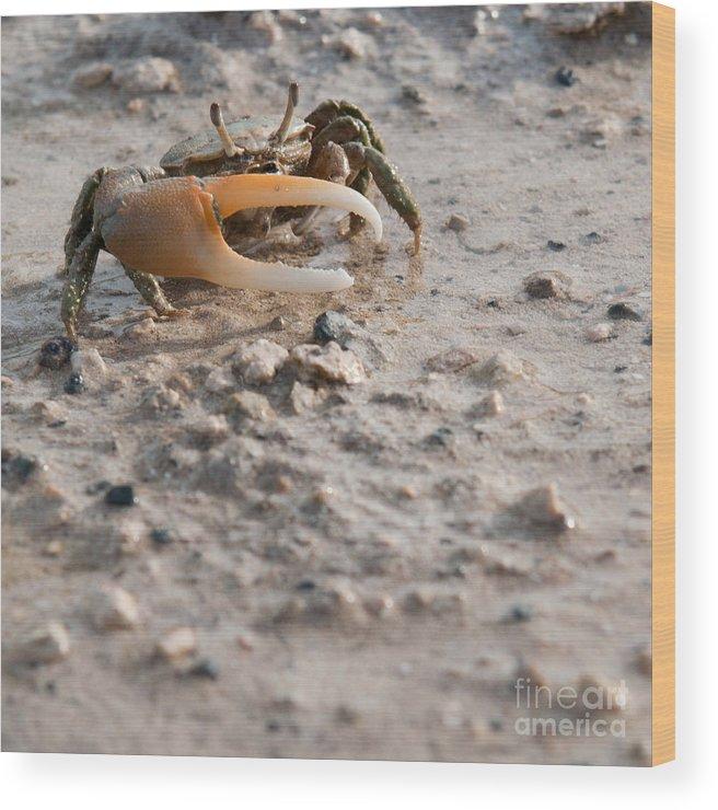 Crab Wood Print featuring the photograph Crab by Luis Alvarenga