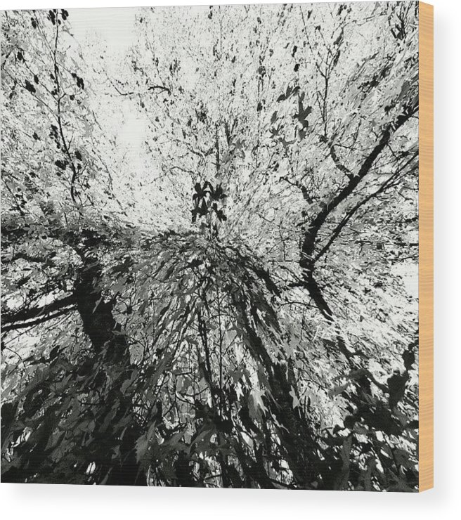 Abstract Wood Print featuring the photograph Maple Tree Inkblot by CML Brown