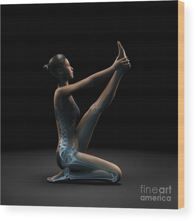 Transparent Wood Print featuring the photograph Yoga Heron Pose by Science Picture Co