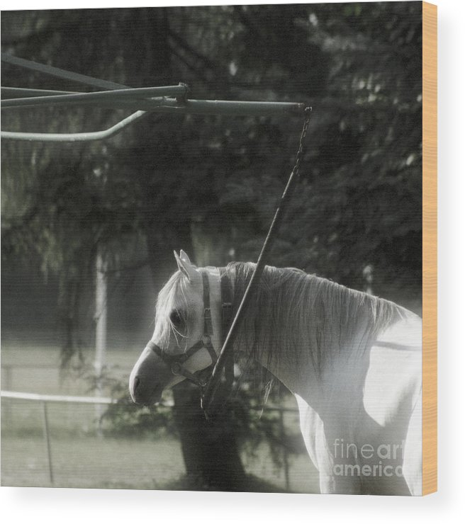 Horse Wood Print featuring the photograph In The Captivity by Angel Ciesniarska