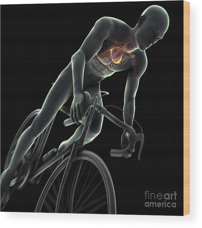 3d Visualisation Wood Print featuring the photograph Cycling by Science Picture Co