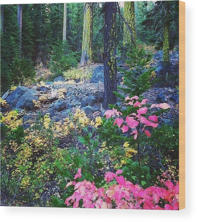 Mohawk Wood Print featuring the photograph A Walk In The #woods On #fall by John Wagner
