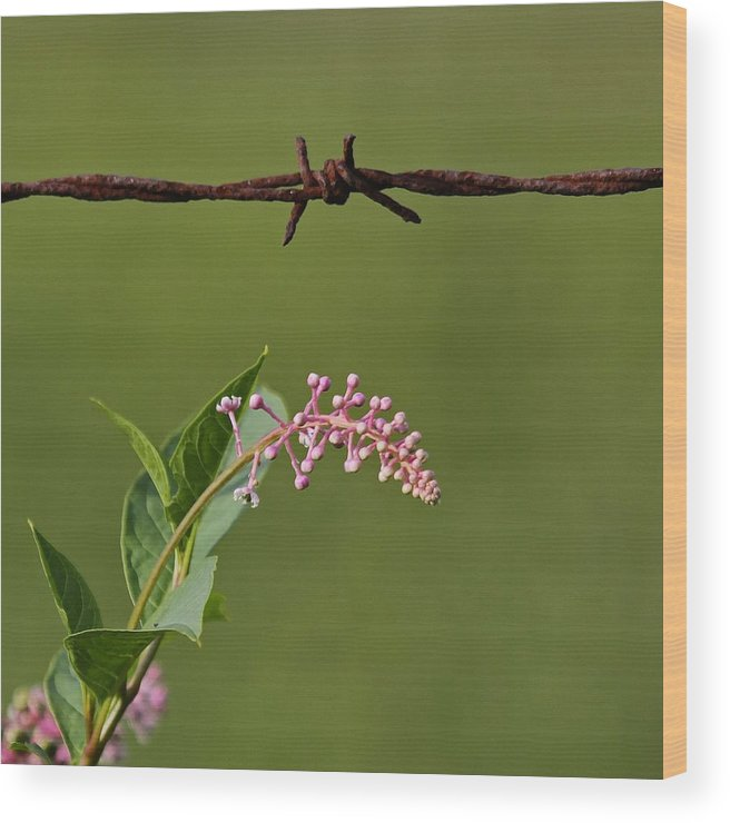 Abstract Wood Print featuring the photograph Abiding by Karen Harper