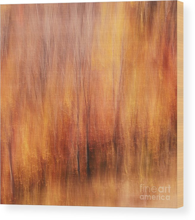 Autumn Wood Print featuring the photograph Autumn Canvas by Aimelle