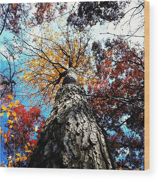 Tree Wood Print featuring the photograph Autumn Rainbow by Phillip Woolf