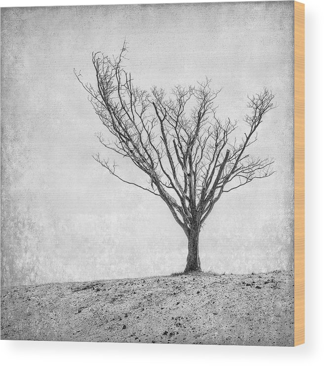 Landscape Photography Wood Print featuring the photograph Desperate Reach by Scott Norris