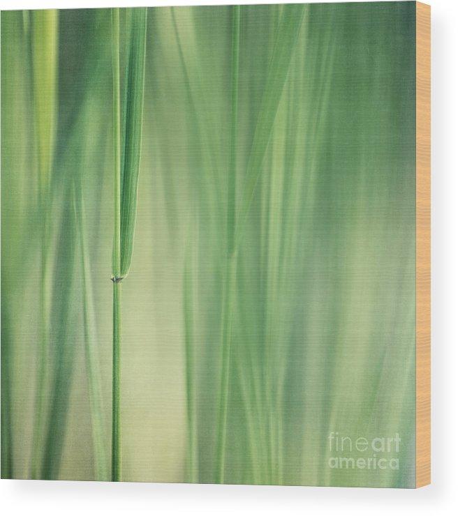 Grass Wood Print featuring the photograph Green Grass by Priska Wettstein