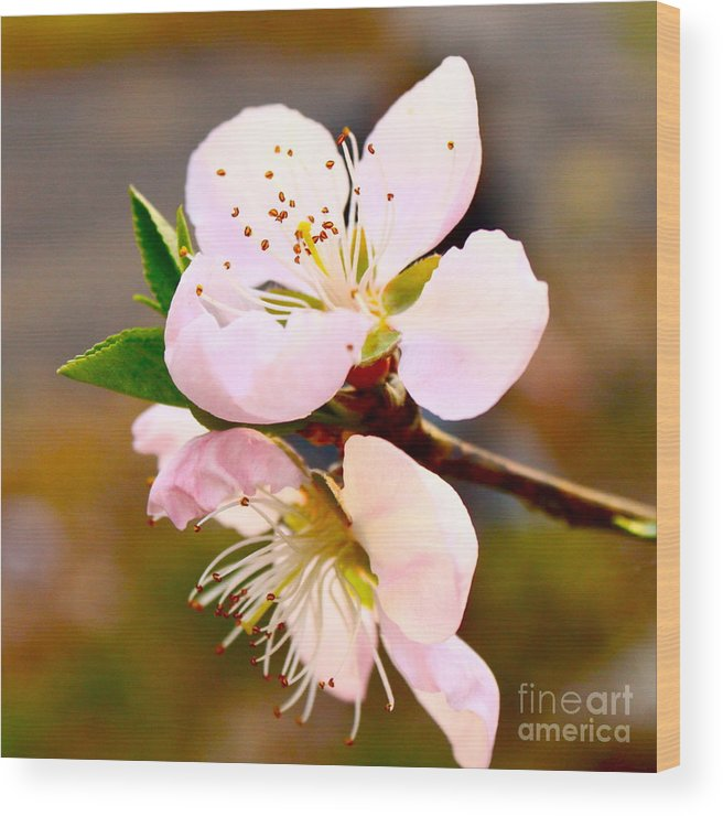 Flower Wood Print featuring the photograph Peach Blossoms 1 by Harmony Hancock