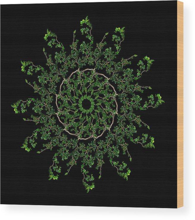 Pinwheel Wood Print featuring the photograph Pinwheel I by Debra and Dave Vanderlaan