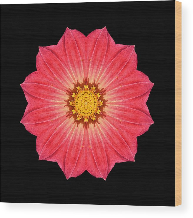 Flower Wood Print featuring the photograph Red Dahlia Hybrid I Flower Mandala by David J Bookbinder