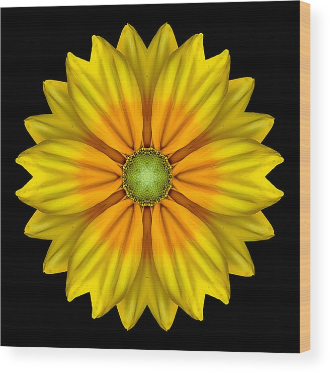 Flower Wood Print featuring the photograph Rudbeckia Prairie Sun I Flower Mandala by David J Bookbinder