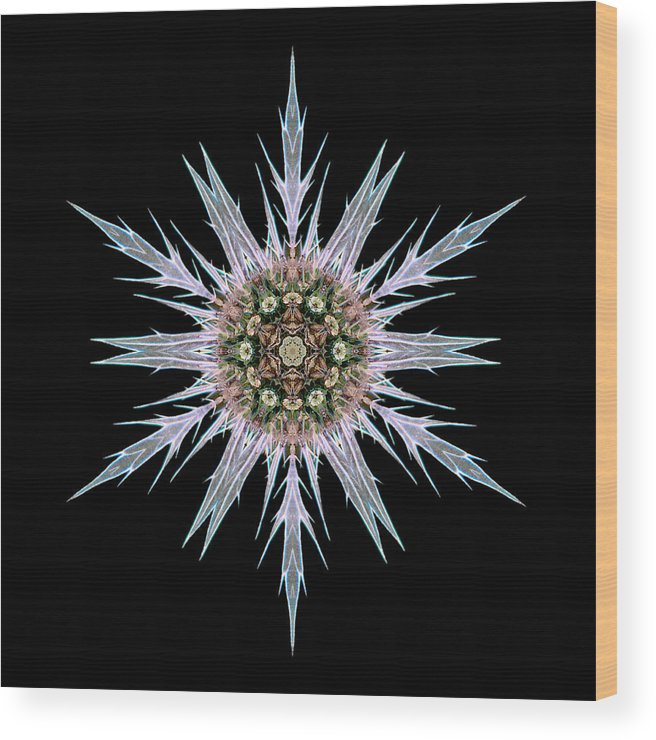 Flower Wood Print featuring the photograph Sea Holly I Flower Mandala by David J Bookbinder