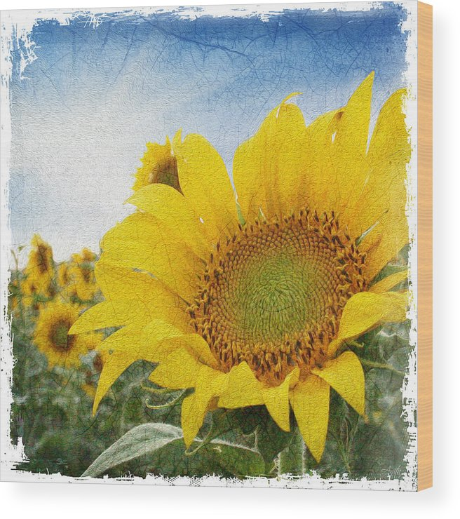 Sunflower Wood Print featuring the digital art Sunny Morning by Anita Hubbard
