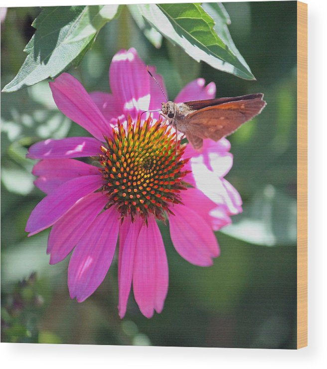 Cone Flower Wood Print featuring the photograph Symbiotic by Suzanne Gaff