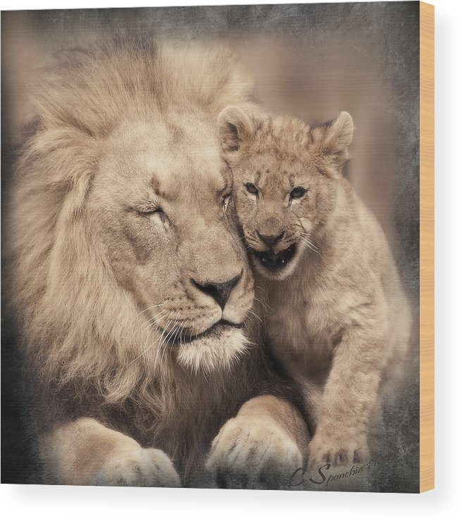 Lion Wood Print featuring the photograph Tenderness by Christine Sponchia