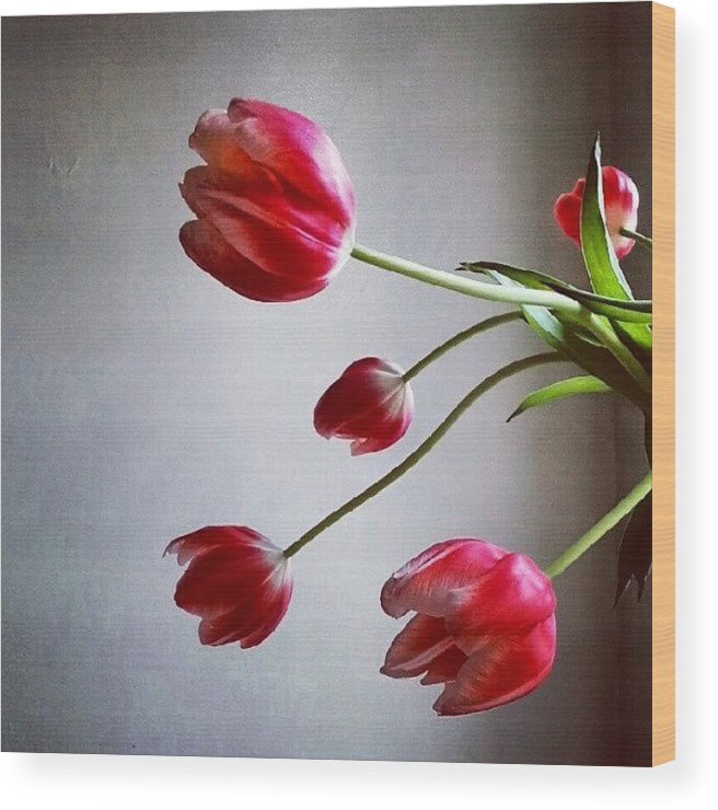 Tulips Wood Print featuring the photograph Tulips by Jill Tuinier