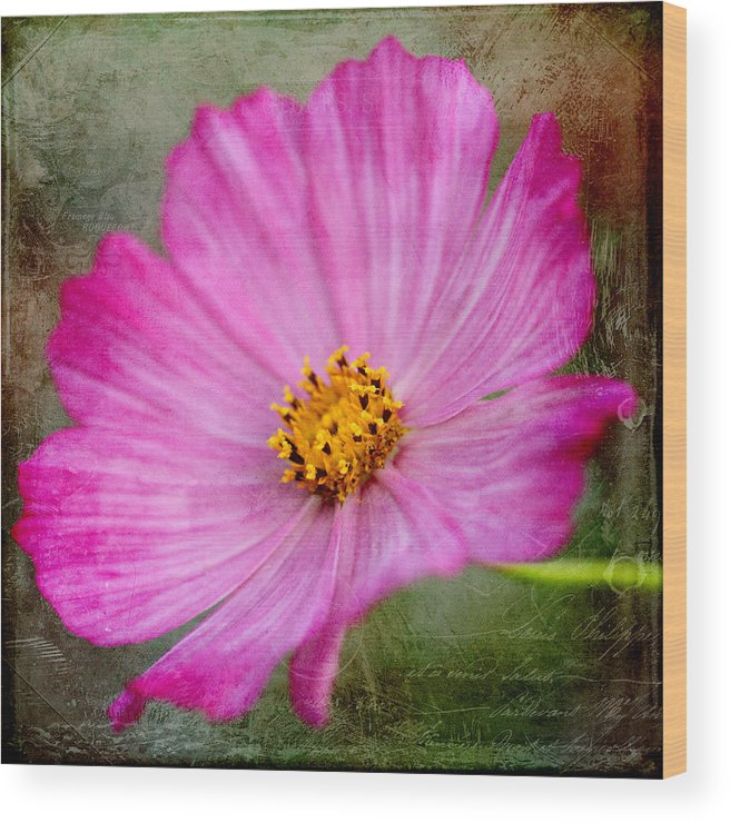 Nature Wood Print featuring the photograph Vintage Pinc Flower by Kamen Zagorov